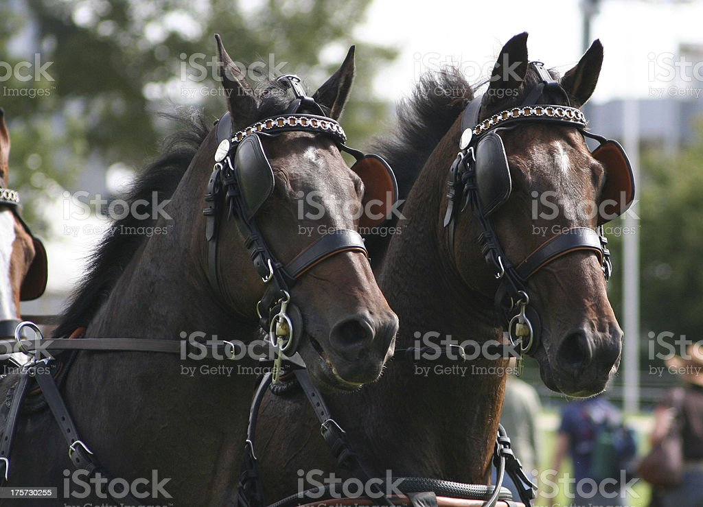 CHIO Aachen, Marathonprüfung royalty-free stock photo