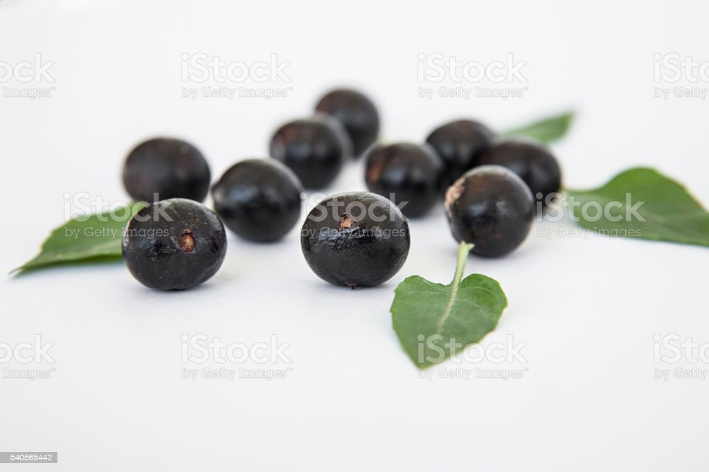 Açai berry fruit acai stock photo