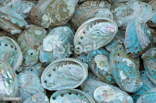 istock Abalone shell 1213495661
