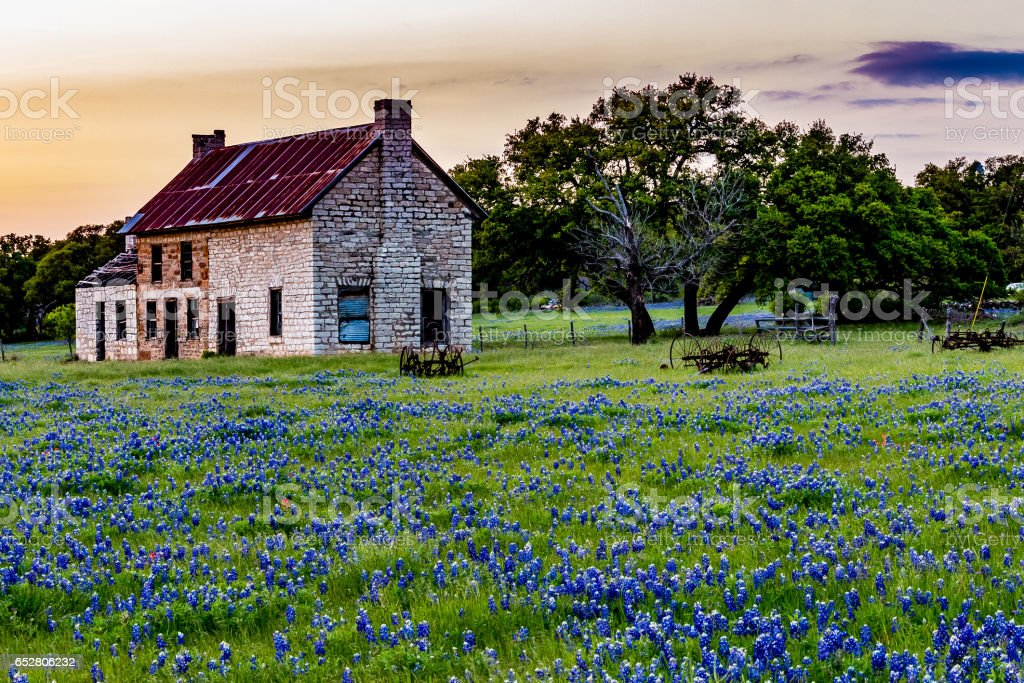 Abandonded Old House in Texas Wildflowers. stock photo