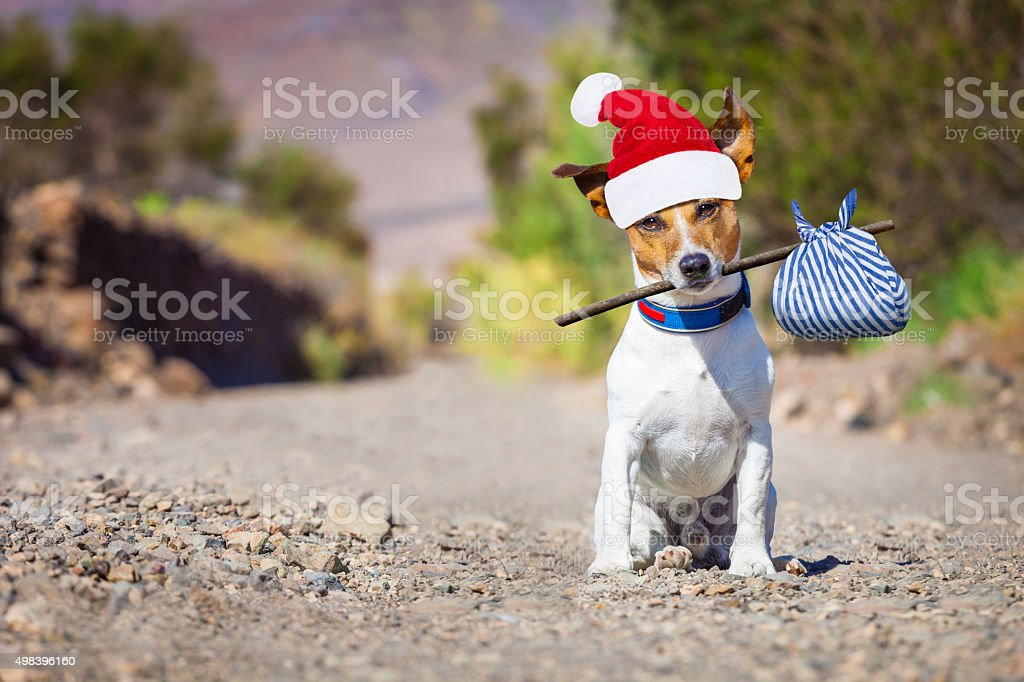 abandoned and lost dog at christmas stock photo