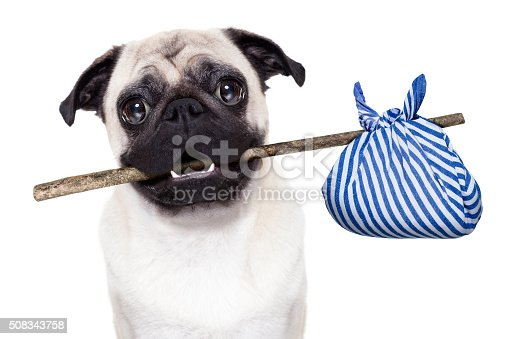 istock abandoned and lost dog 508343758