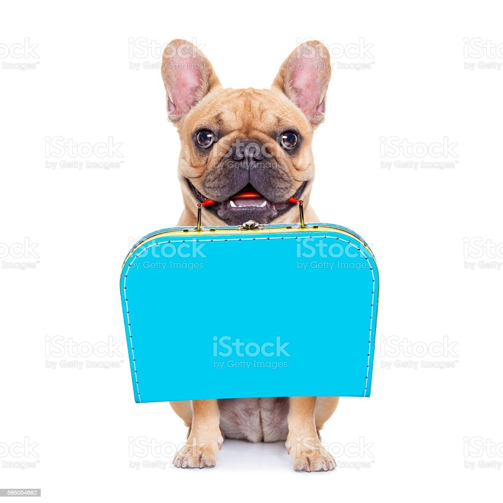 abandoned and lost dog stock photo