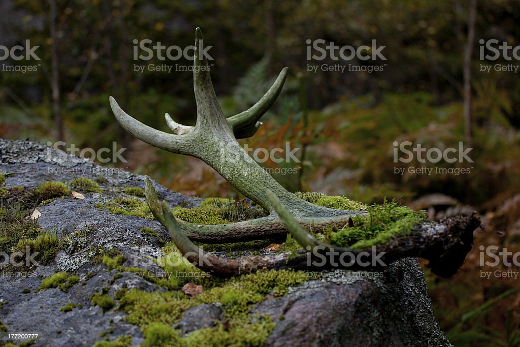 Abandoned antlers stock photo