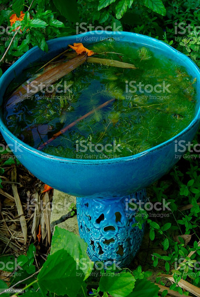 Abandoned Bird Bath stock photo