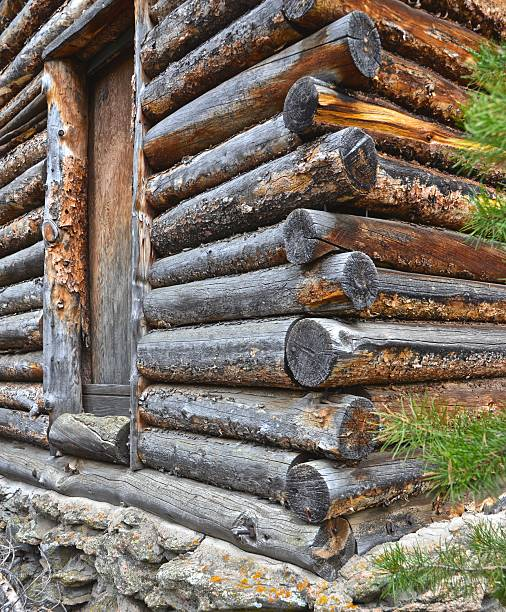 Abandoned Cabin in the Pines #1 stock photo