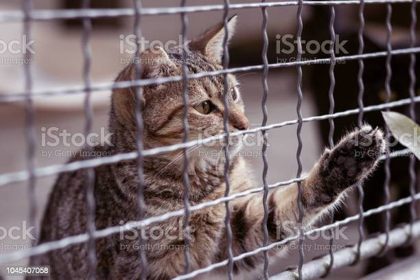Abandoned cat behind the fence in animal shelter pet adoption picture id1045407058?b=1&k=6&m=1045407058&s=612x612&h=vjngkc34trvz6hfkmkbmye22mgigzztak lvjmgbcuk=