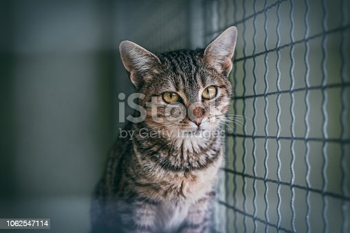 istock Abandoned cat in cage. Animal shelter. Tabby cat 1062547114