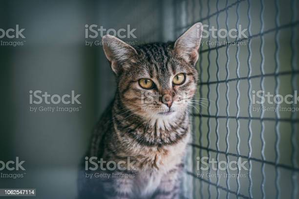 Abandoned cat in cage animal shelter tabby cat picture id1062547114?b=1&k=6&m=1062547114&s=612x612&h=wcqx65t5ftrgkxylcirnkg989 my82npcqv ptmh38a=