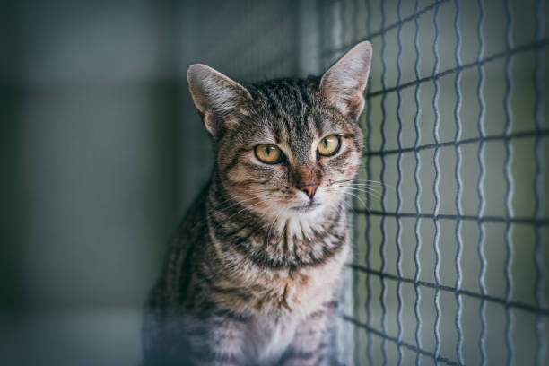 Abandoned cat in cage. Animal shelter. Tabby cat stock photo