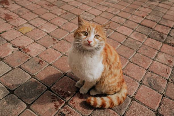 Verlassene Katze – Foto