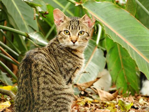 Abandoned cat at ibirapuera park