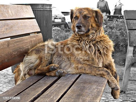 View of a abandoned city dog on a bench.