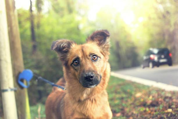 abandoned dog on the street stock photo