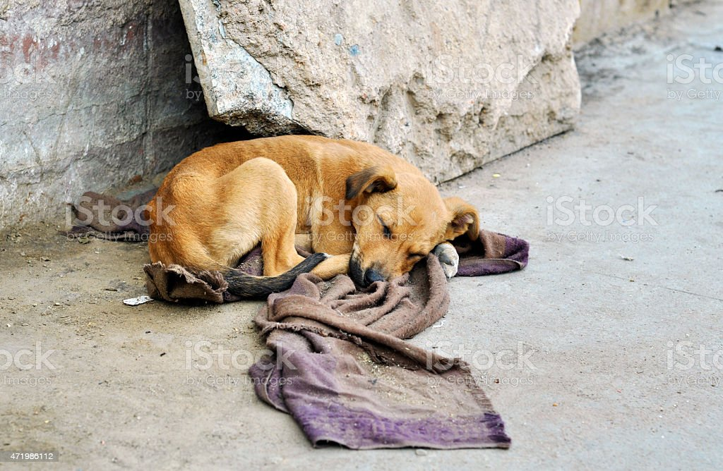 Abandoned dog stock photo