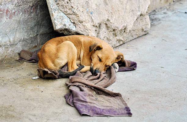 abandoned dog - abandoned stock photos and pictures