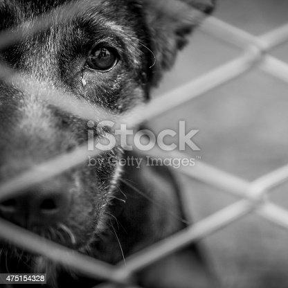 istock Abandoned dog 475154328