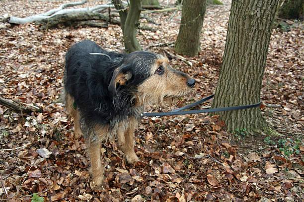 Verlassenen Hund – Foto