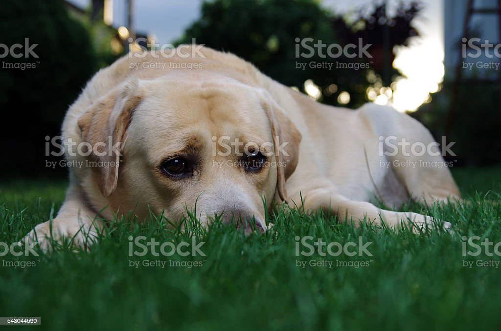 Abandoned dog waiting for his owner stock photo