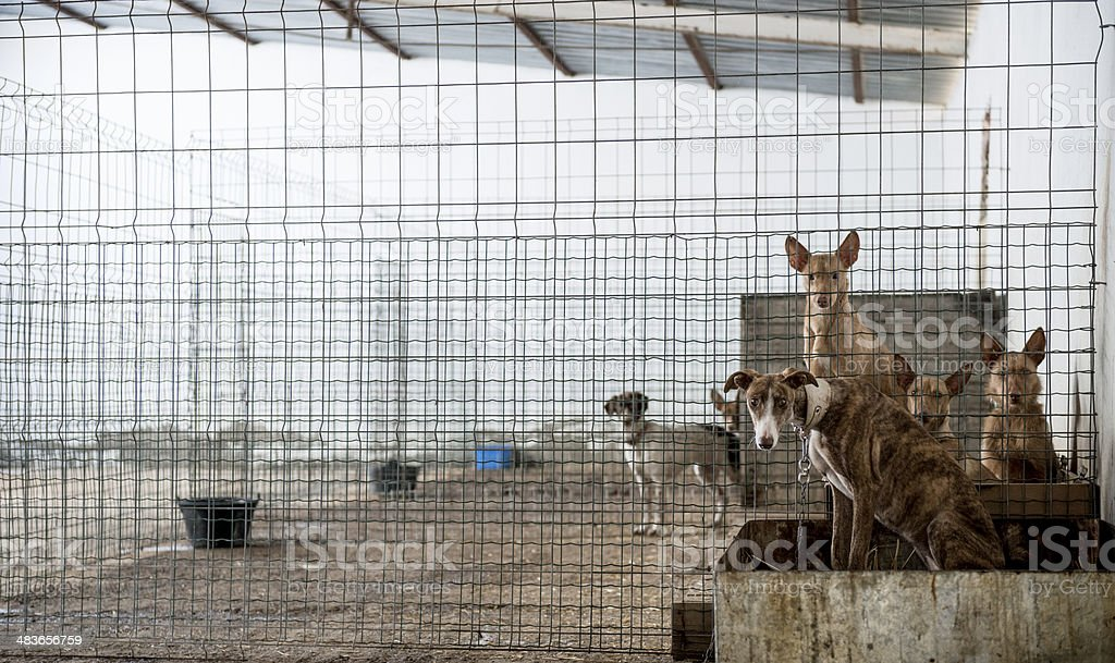 Abandoned dogs in a cage stock photo