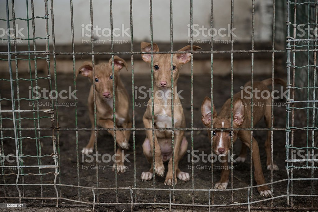 Abandoned dogs in a cage royalty-free stock photo