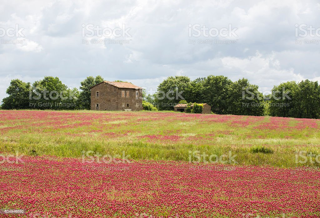 Abandoned farmhouse and clover meadow in Lazio, Italy stock photo
