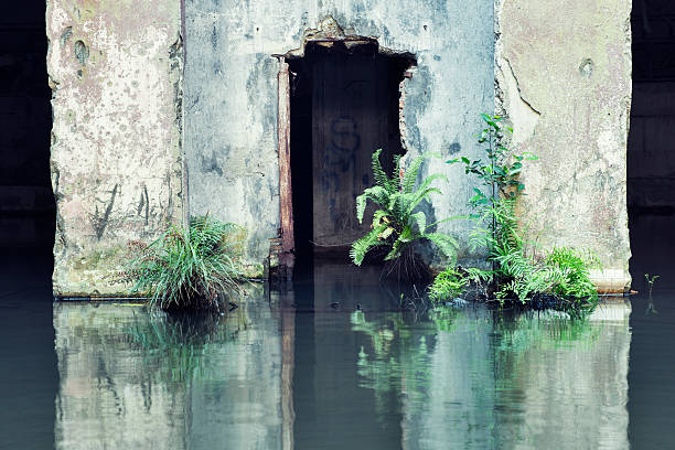 Abandoned Flooded Doorway Urban Ruin Architecture stock photo