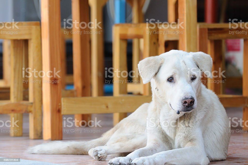Abandoned homeless stray dog crouching on street foto royalty-free