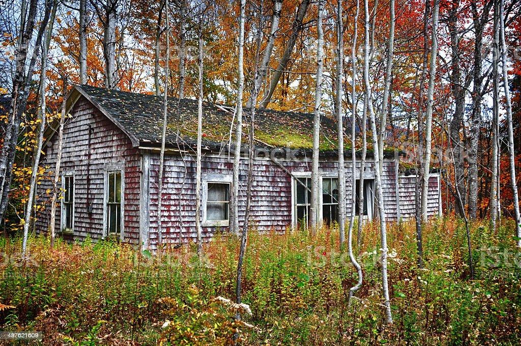 Abandonado casa na floresta em Cape Breton, Nova Escócia - foto de acervo