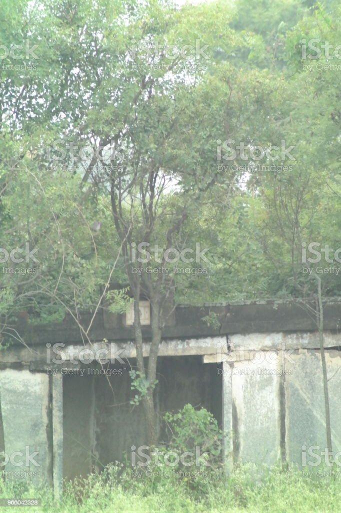 abandoned in Nature - Royalty-free Abandoned Stock Photo