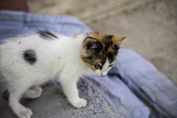 Abandoned kittens nature Abandoned puppy cats in the street, domestic animals and pets ARPA stock pictures, royalty-free photos & images