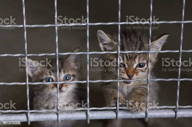 Abandoned little kittens in an animal shelter picture id991370006?b=1&k=6&m=991370006&s=612x612&h=sopl1 rygdvbk3vwacpau8hiqwmuvmltiwfrx5yypaw=