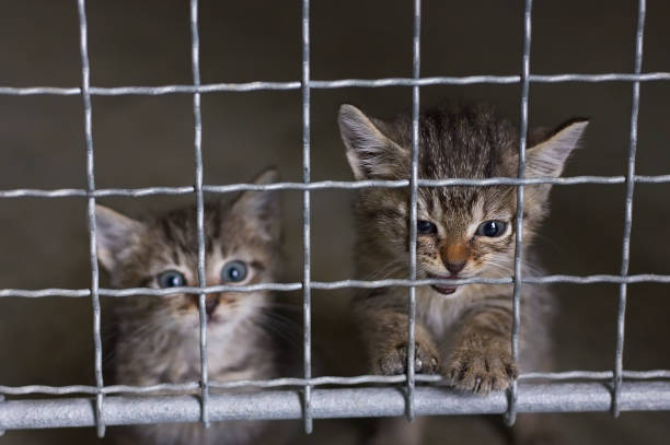 abandoned little kittens in an animal shelter small cats behind fence sheltering stock pictures, royalty-free photos & images