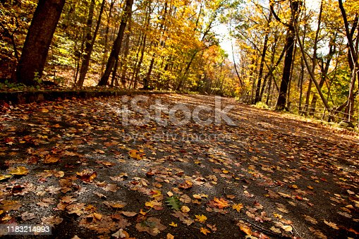 Old 9w highway covered with leaves. Once a bustling thoroughfare to New York State abandoned a long time ago.