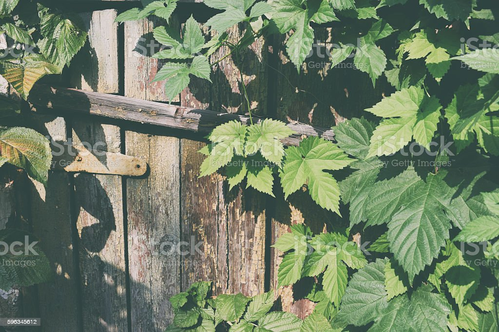 abandoned old barn royalty-free stock photo