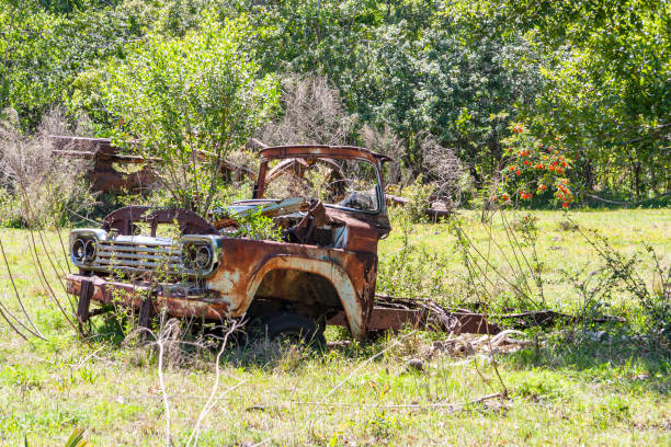 """Abandoned Pickup Truck in a field on the edge of the woods with very little remaining """"truck"""" but serving well as a """"flower pot"""""""