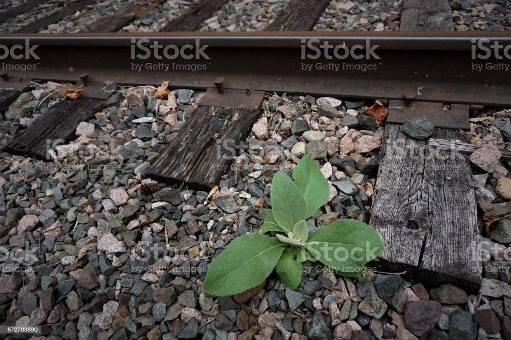 abandoned railroads stock photo