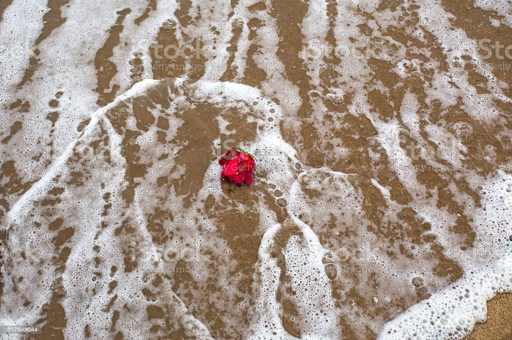 abandoned rose on beach, wave surfing stock photo
