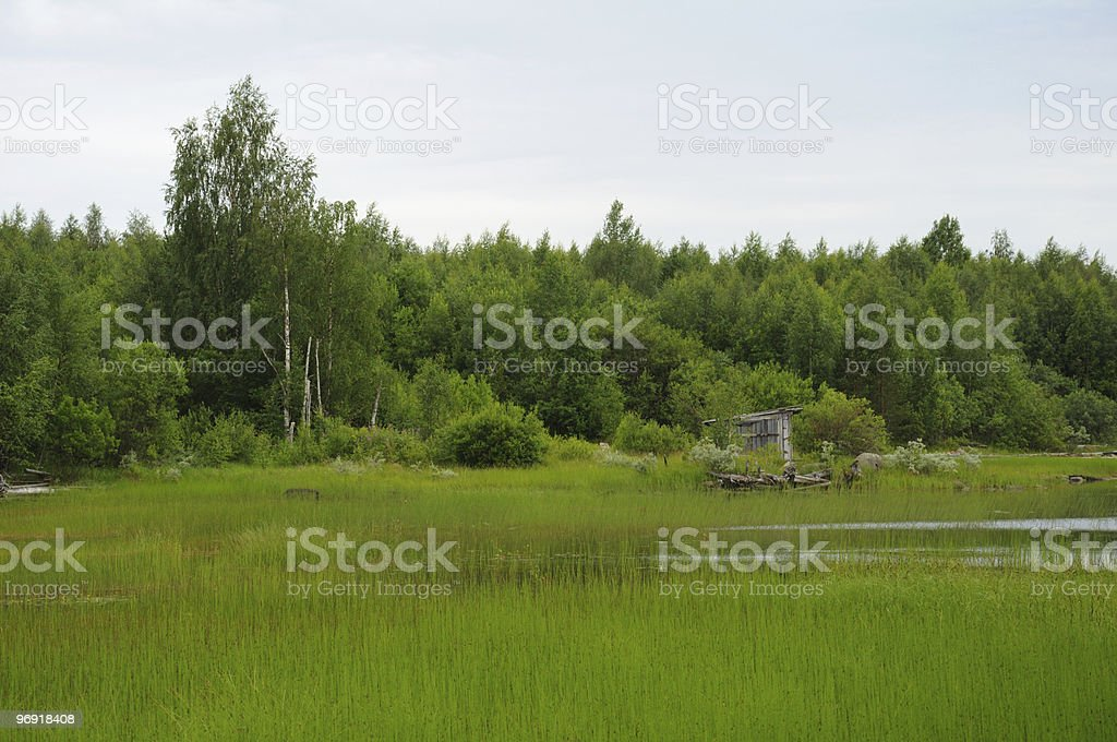 Abandoned slip docs on a lake shore royalty-free stock photo