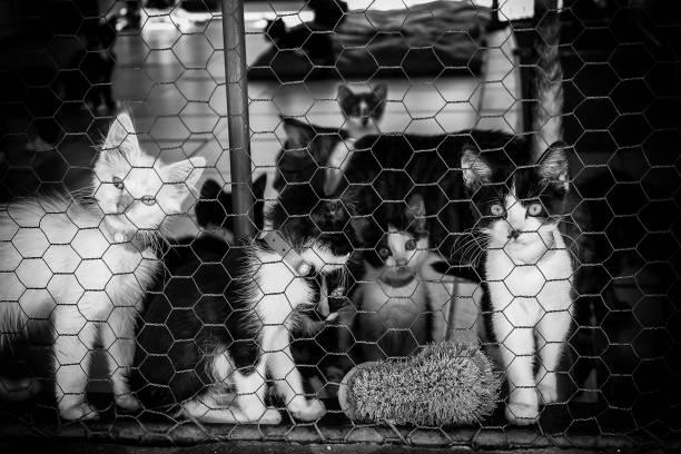 Abandoned street cats picture id950102706?b=1&k=6&m=950102706&s=612x612&w=0&h= jjofhzt4u2m8mq6lcgogyvuv3ujaauwe9jqpn62eg4=