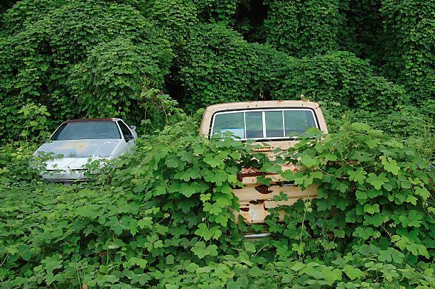 Abandoned vehicles covered by kudzu vines stock photo