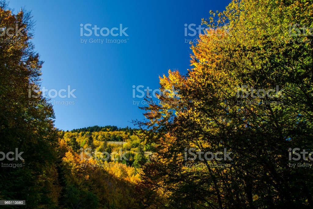 Abant Lake royalty-free stock photo