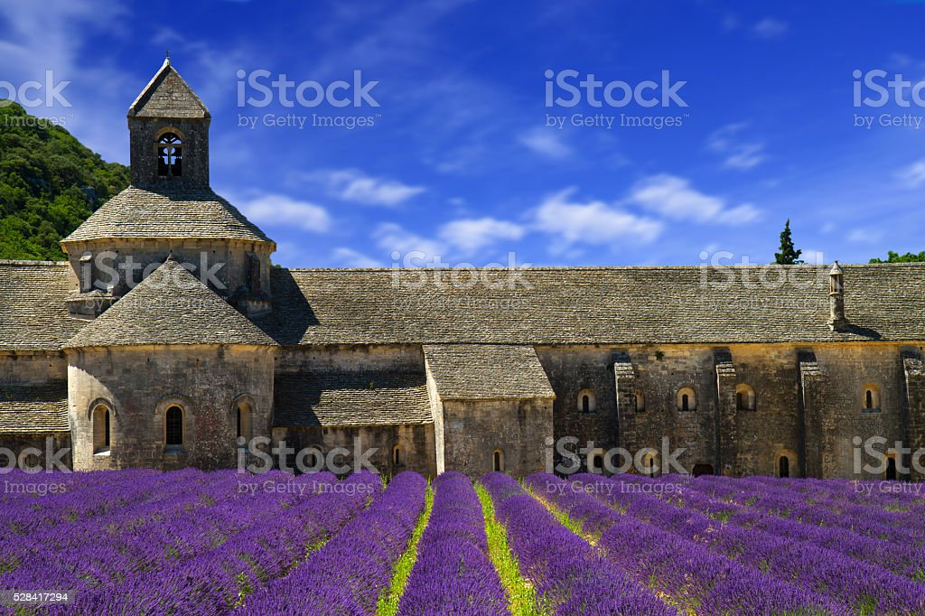 Abbey of Senanque and blooming rows lavender flowers. Gordes, Lu stock photo