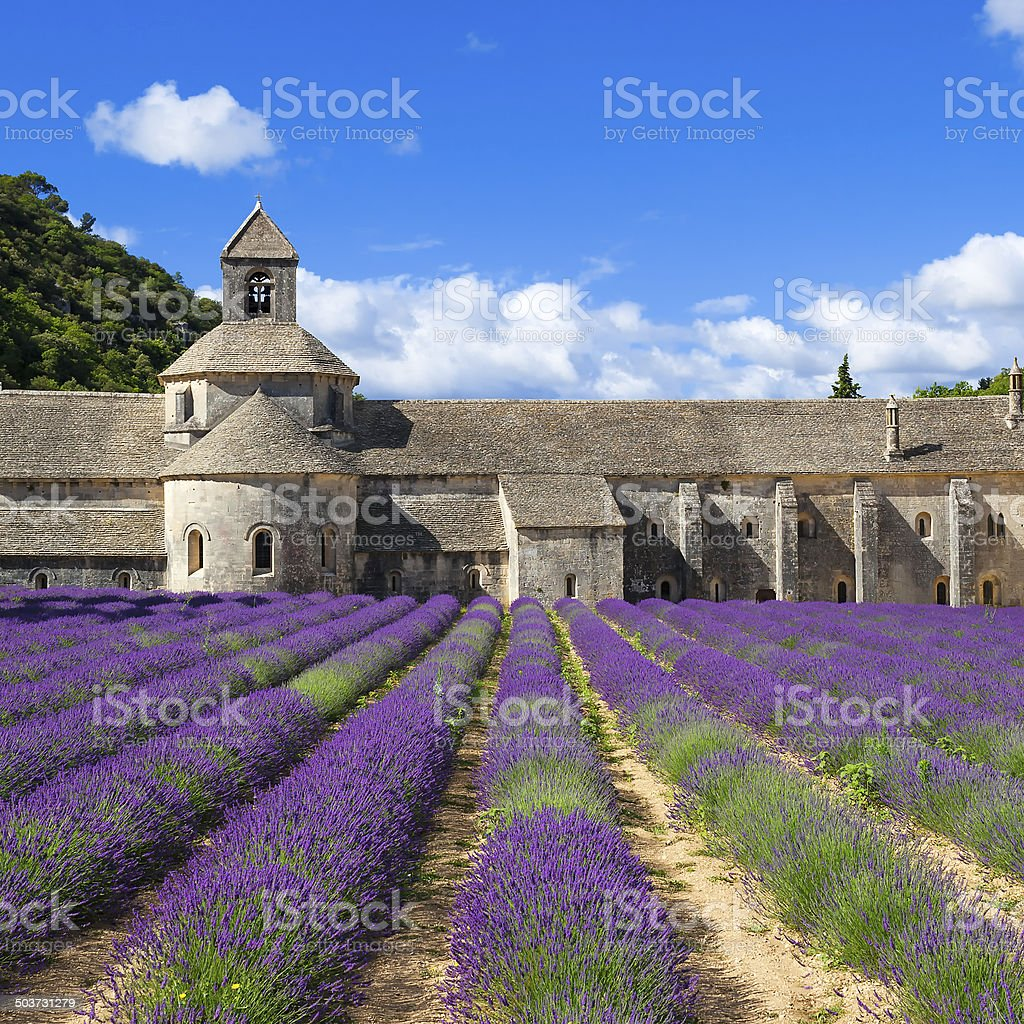 Abbey of Senanque and lavender stock photo