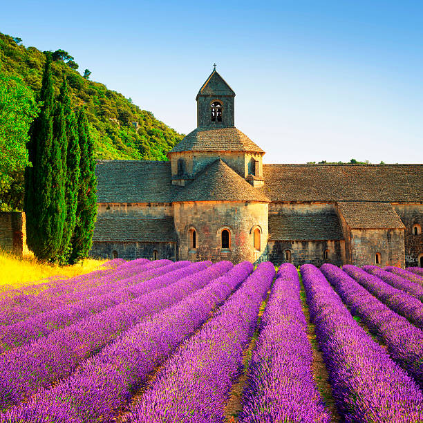 Abbey of Senanque blooming lavender flowers on sunset. Gordes, L Abbey of Senanque and blooming rows lavender flowers on sunset. Gordes, Luberon, Vaucluse, Provence, France, Europe. abbey monastery stock pictures, royalty-free photos & images
