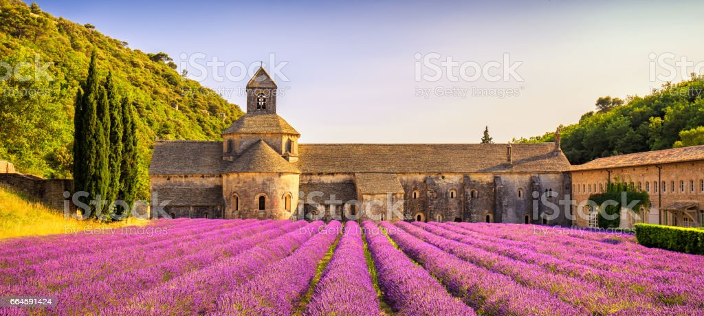 Abbey of Senanque blooming lavender flowers panorama at sunset. Gordes, Luberon, Provence, France. stock photo