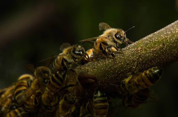 Abeja en panal Una abeja se separa del panal. alas stock pictures, royalty-free photos & images