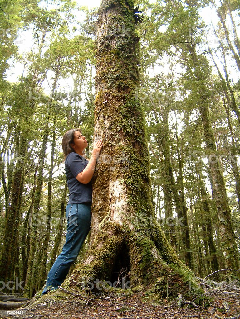 Abel Tasman Park - New Zealand stock photo