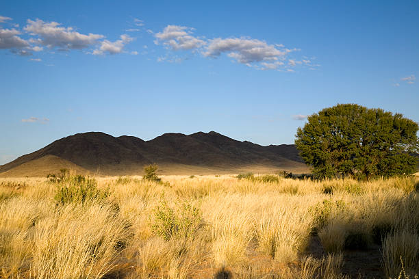 abendsonne - afrikanische steppe dürre stock-fotos und bilder