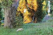 istock Abendstimmung im Naturschutzgebiet, Lüneburger Heide, Northern Germany 891549304